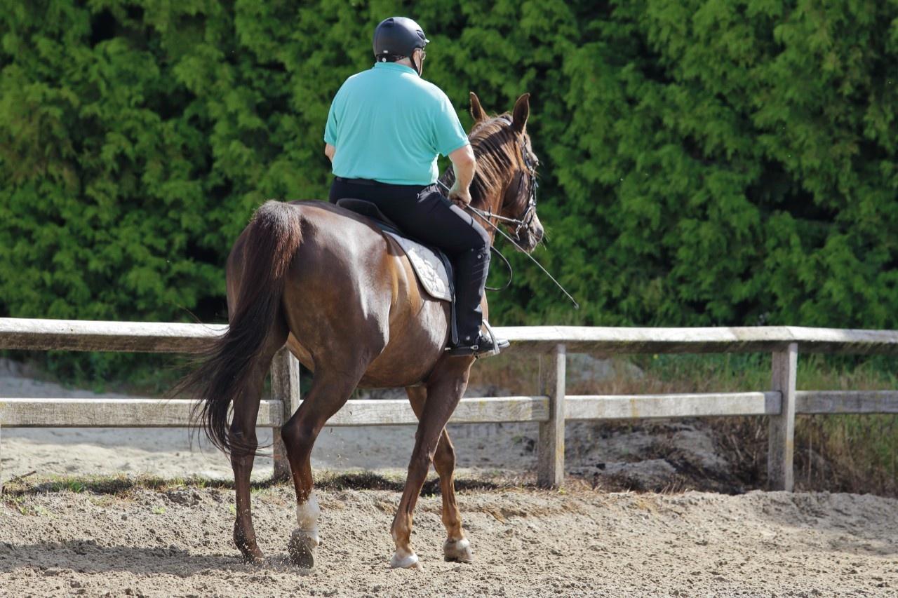 Deutsches reitpony lebenserwartung Pferd