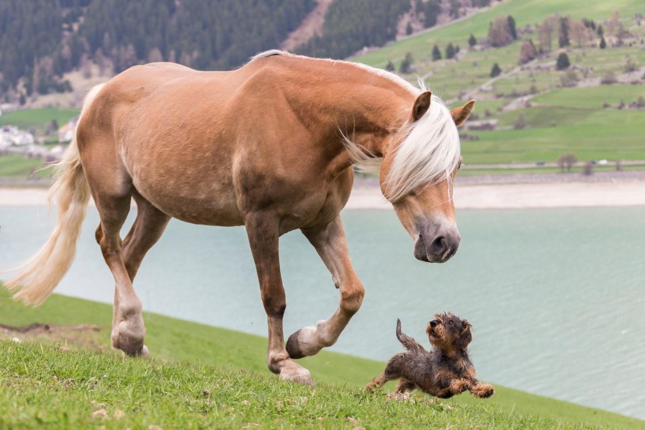 Hunde Und Pferde Spiele