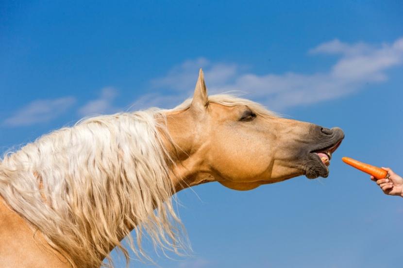 Pferd von frau genommen wird Hauspferd