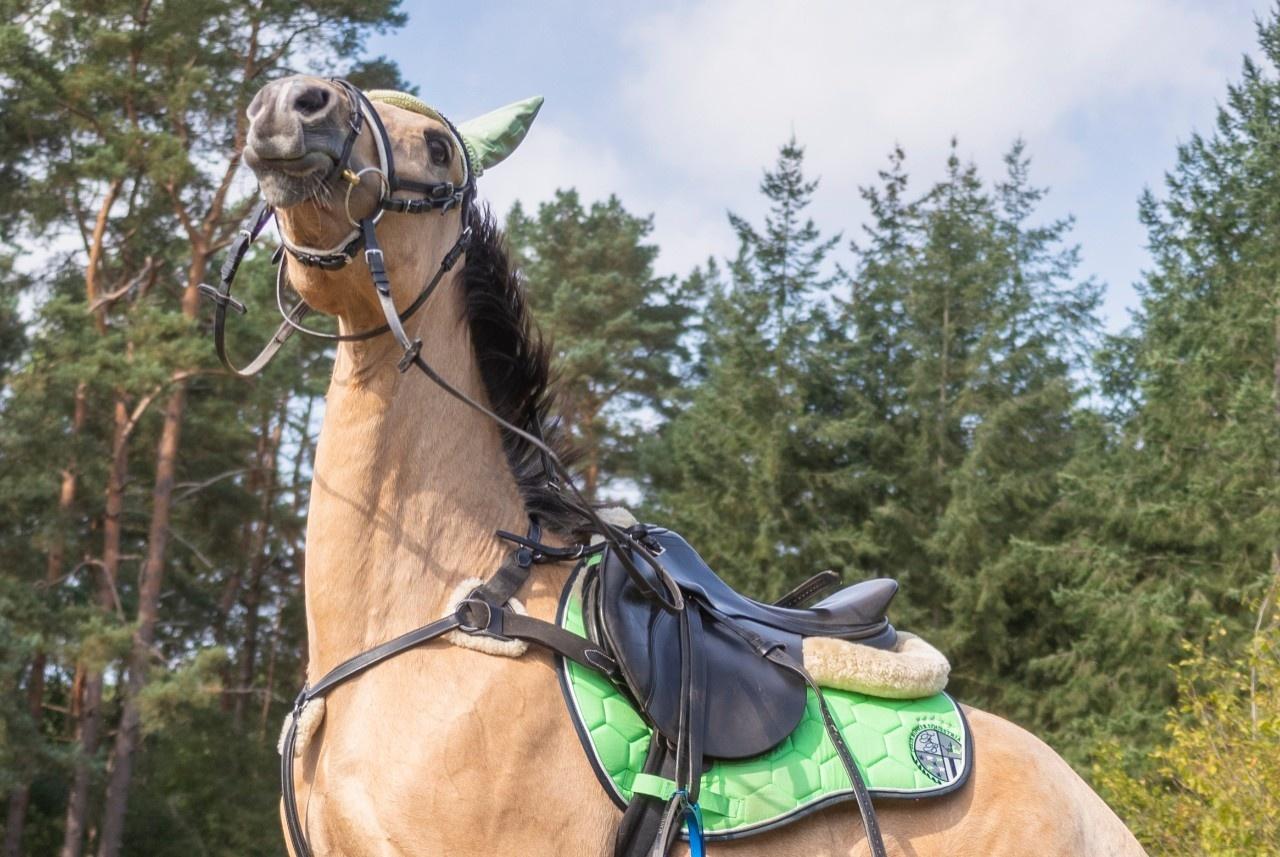 In frau kommt pferd Kaley Cuoco