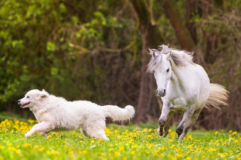 Keine Angst Vor Bello So Werden Pferde Hundesicher