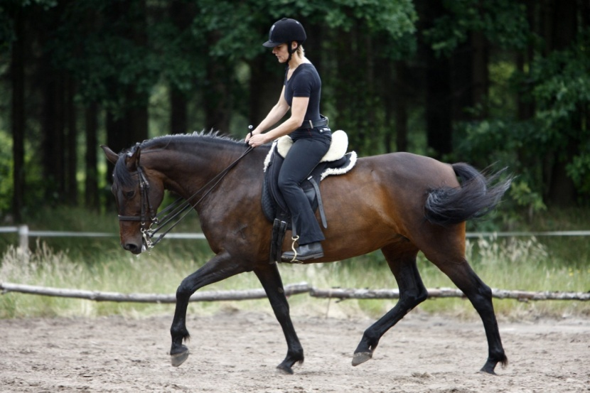 Reiten Schwanz vor dem Training
