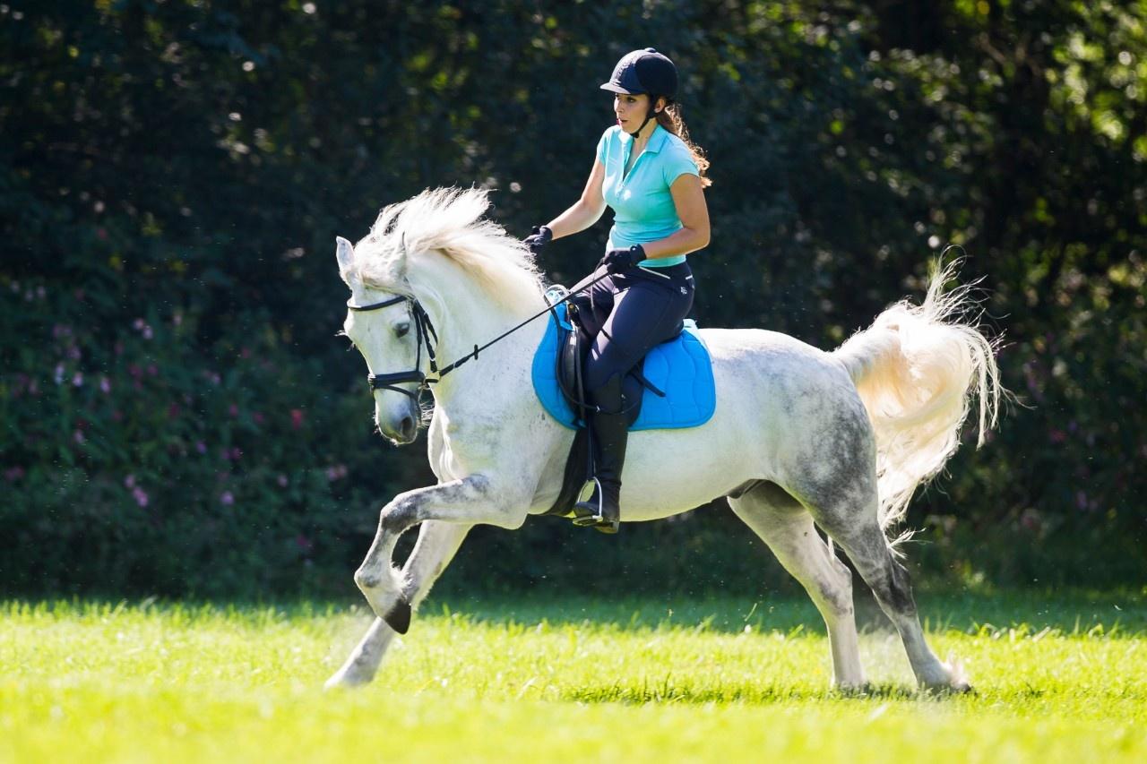 Ausreittraining: So lernen stürmische Pferde Gelassenheit