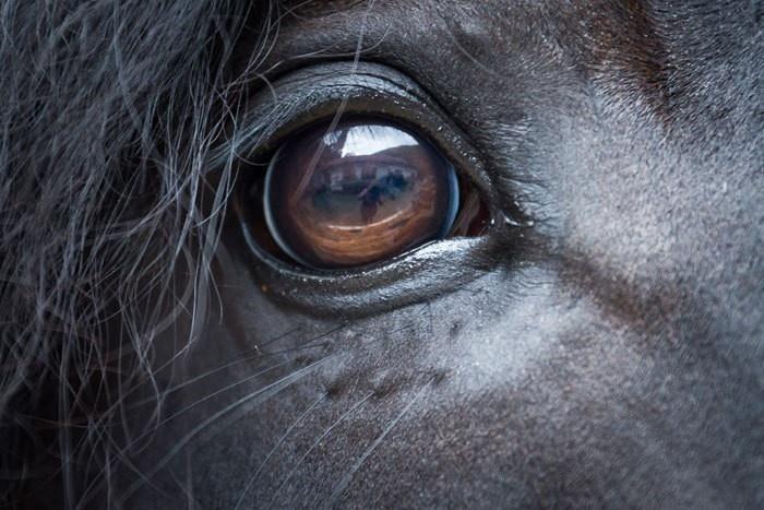 pferdefuß krankheit